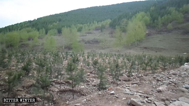 Some saplings have been planted on the site after the demolish of the lama temple